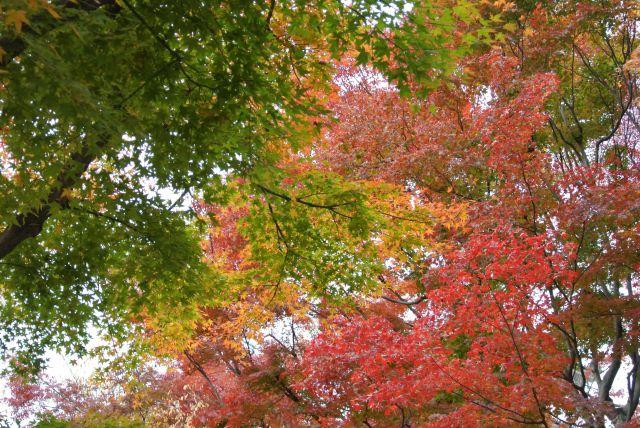 エクセル大暴落と秋