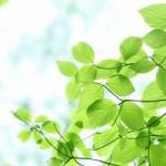新緑と株式投資
