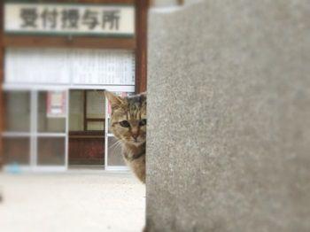 様子見の猫