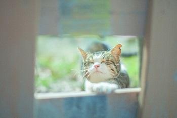 猫休み株式相場