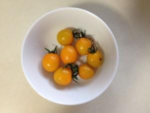 家庭菜園 トマトたくさん