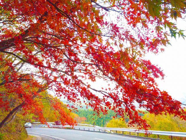 秋の始まりのイメージ