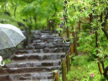 6月梅雨の画像