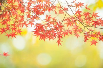 高配当銘柄と紅葉