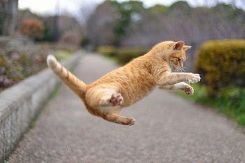 3月決算高配当銘柄と猫