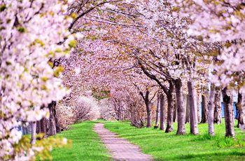 桜と株式相場