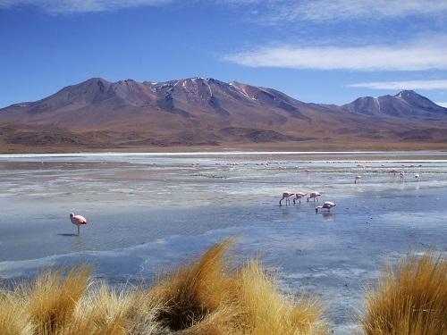 チリ アタカマ砂漠とフラミンゴ